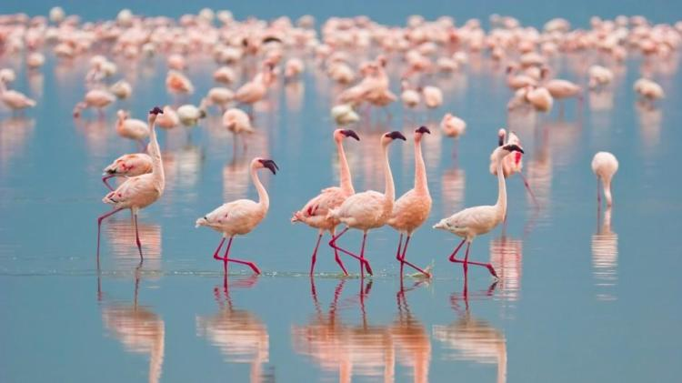 flamingo-group.jpg.adapt.945.1
